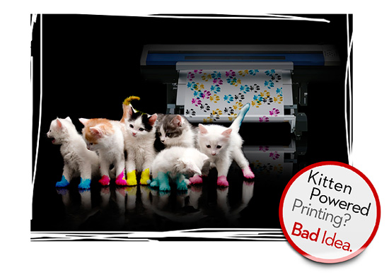 Roland-Contest-Release-the-Kittens