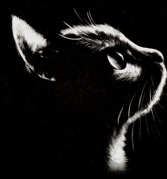 Reflective Kitty